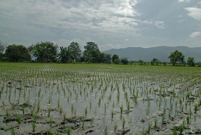 Jázmin rizs vízben ázik